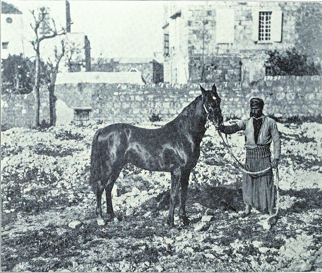 Palestine, early twentieth century. [Library of Congress]